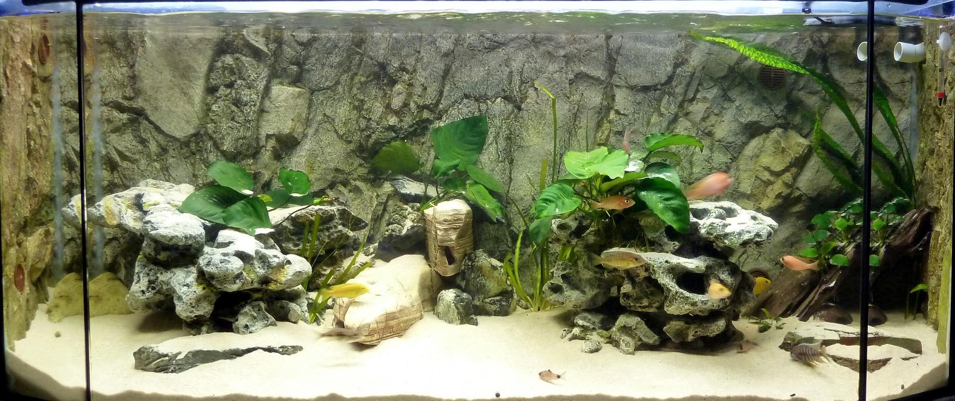 african aquarium planung aufbau. Black Bedroom Furniture Sets. Home Design Ideas